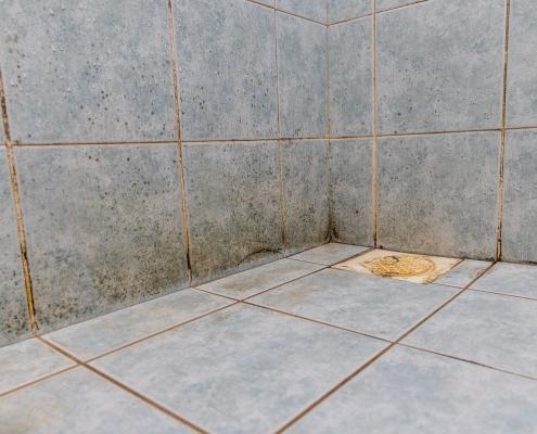 Tout savoir sur la moisissure dans la salle de bain